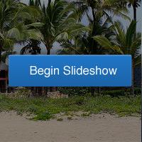 tree-Begin_slideshow-tiny