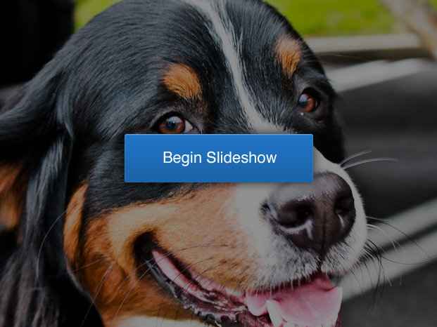 pet-slideshow